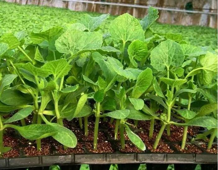 有机肥,生物有机肥,育苗基质,基肥,底肥,有机肥生产设备,湖南有机肥厂家,有机肥价格,湖南有机肥